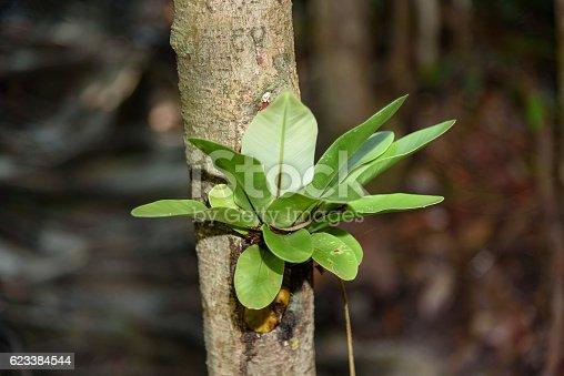 485413653istockphoto Plant on the tree bark 623384544