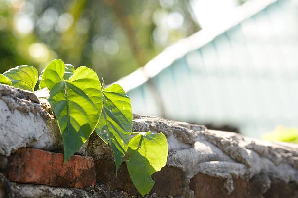 pflanze an der wand für hintergrund / - skulpturprojekte stock-fotos und bilder