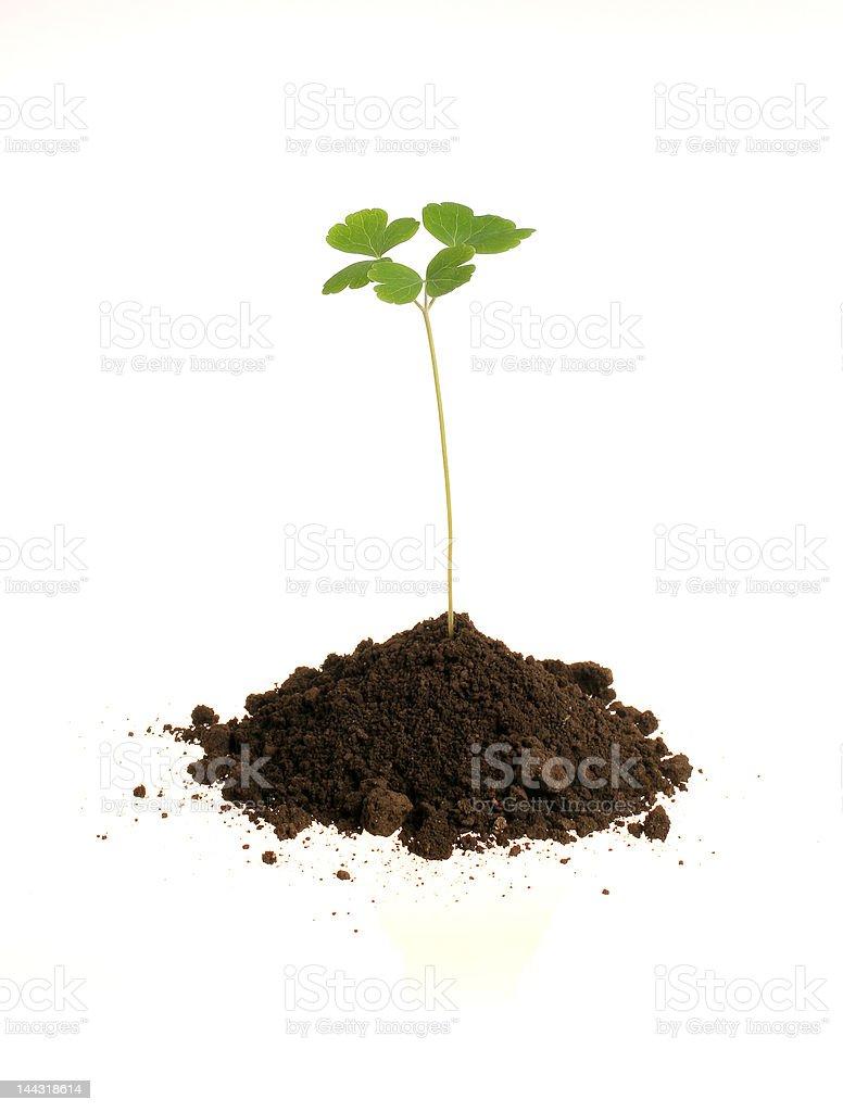 plant royalty-free stock photo