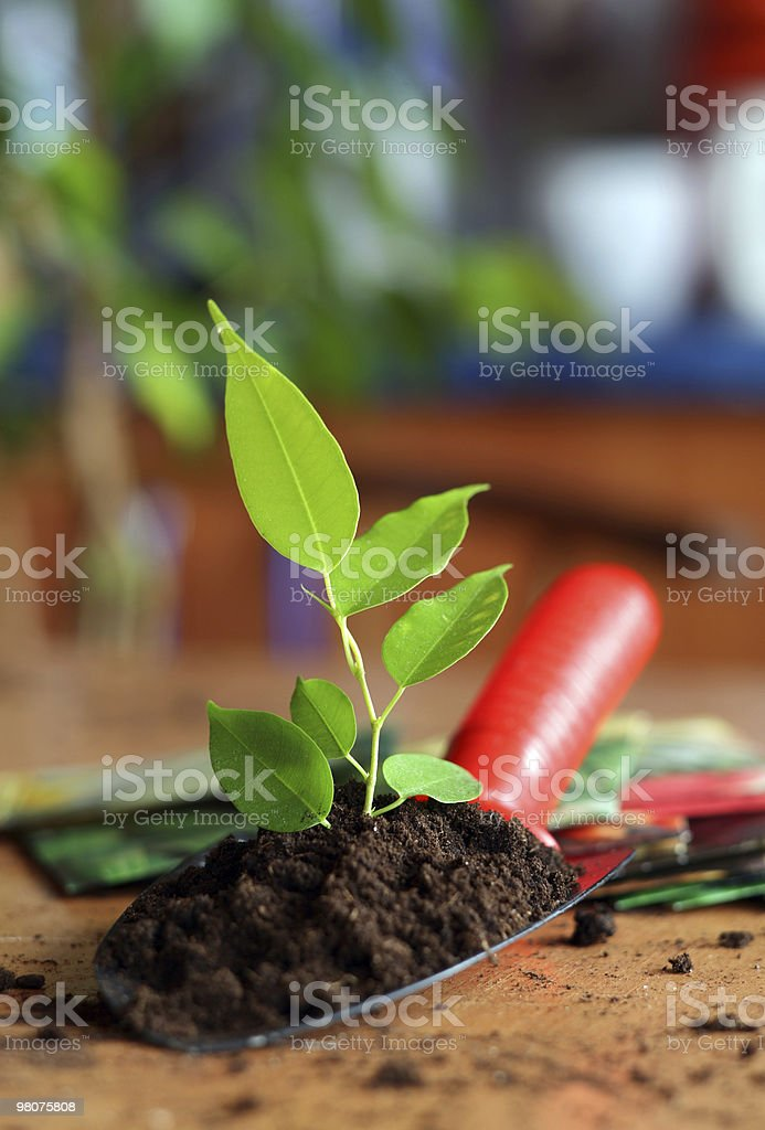 Plant royalty-free stock photo
