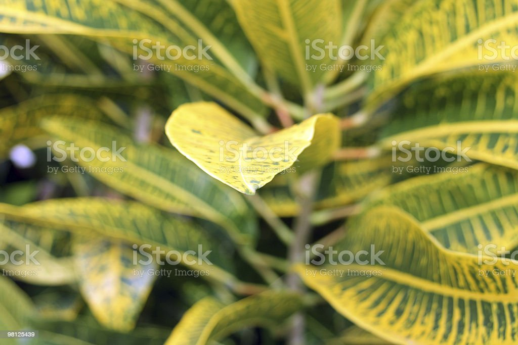 Plant foto stock royalty-free