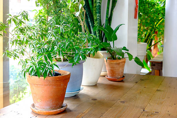 Plant pot displayed in the window stock photo