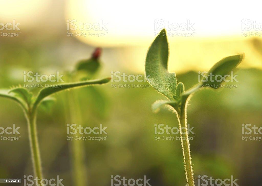 Plant propagation. royalty-free stock photo