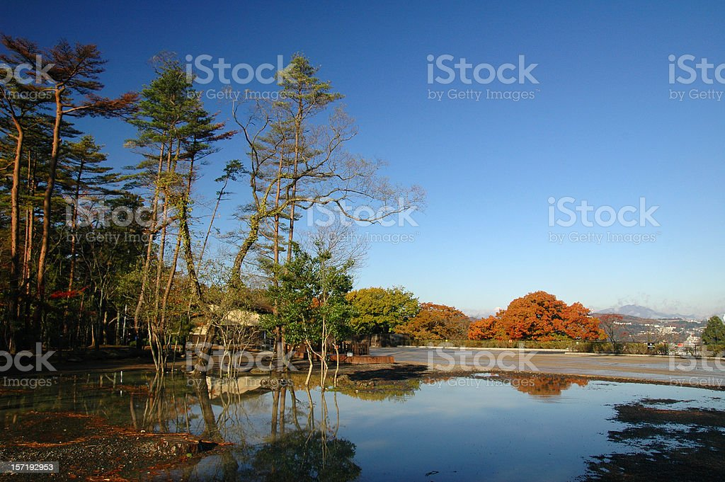Plant Reflection royalty-free stock photo