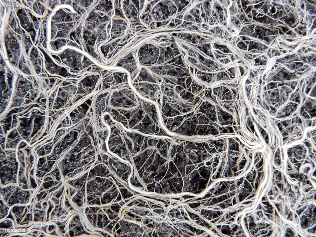Pflanze Wurzeln – Foto