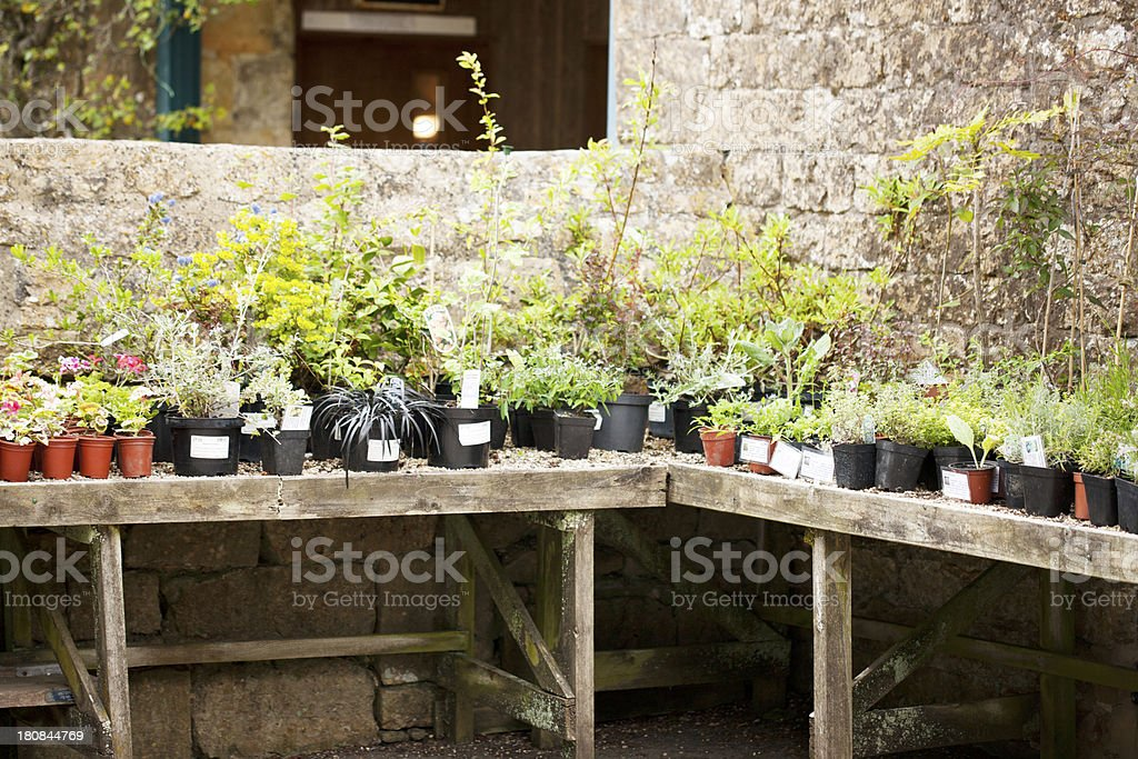 Plant sale royalty-free stock photo
