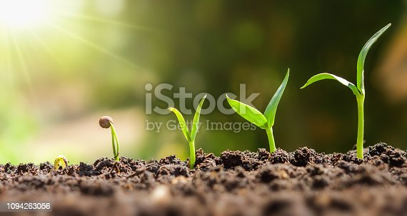 istock plant seeding growing step. concept agriculture 1094263056