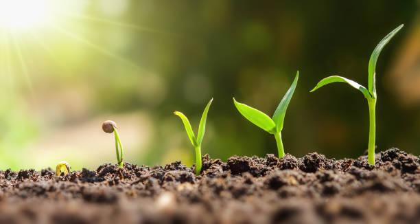 pflanze seeding wachsenden schritt. konzept-landwirtschaft - heben stock-fotos und bilder