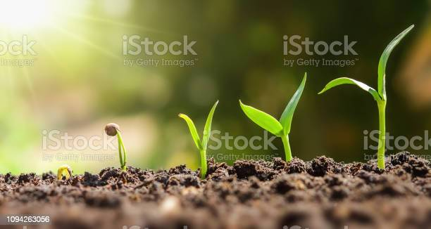 Photo of plant seeding growing step. concept agriculture
