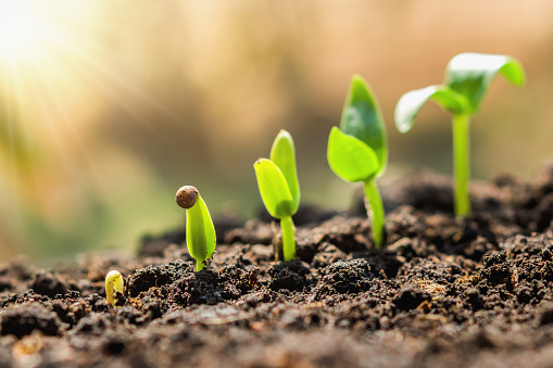 1094263056 istock photo plant seeding growing step. concept agriculture 1094263060