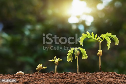 istock plant seeding growing step with sunlight with vintage tone filter 912882270