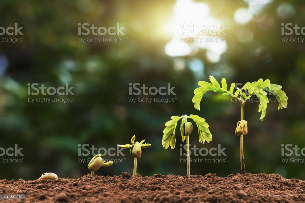 plant seeding growing step with sunlight with vintage tone filter stock photo