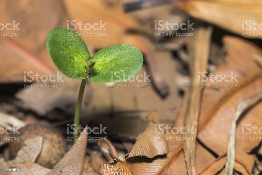 Plant seedling royalty-free stock photo