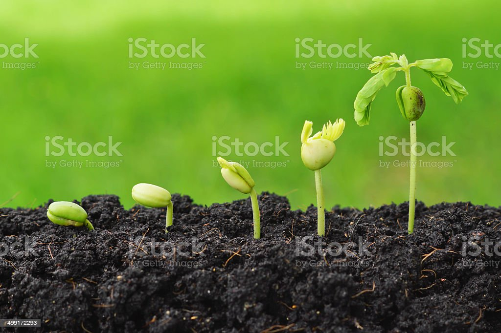 plant seedling stock photo