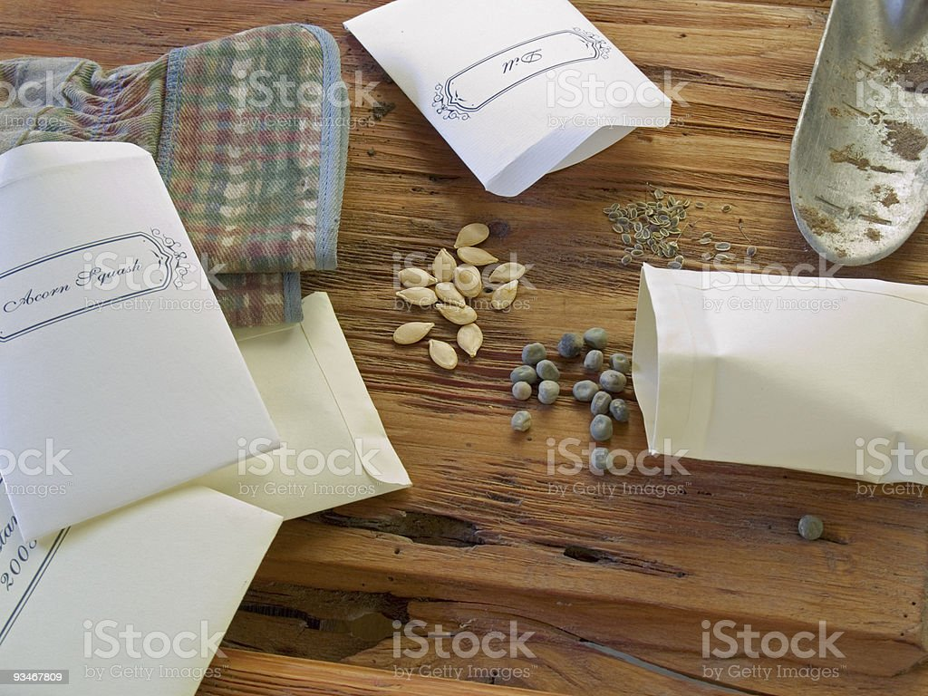Plant seeds in bags for planting stock photo