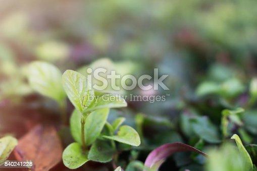 istock Plant Selective focus 840241228
