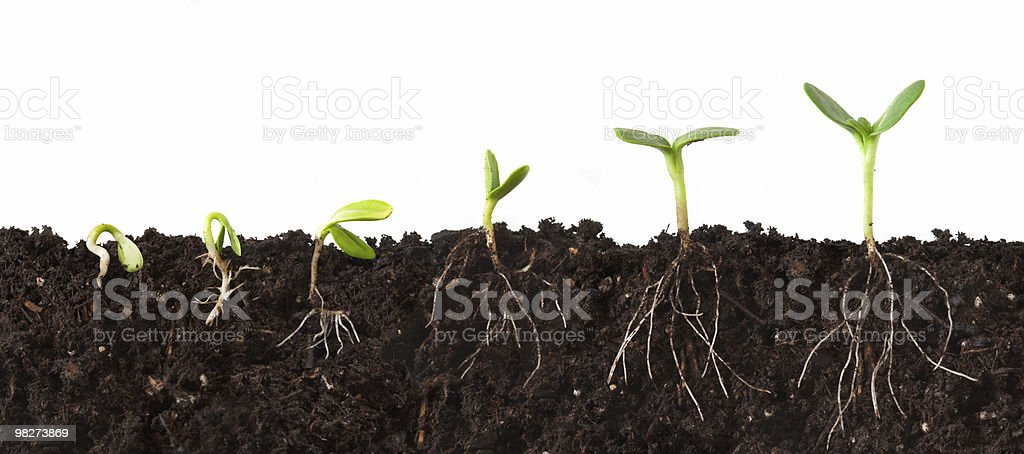Plant Sequence Cutaway with Roots stock photo