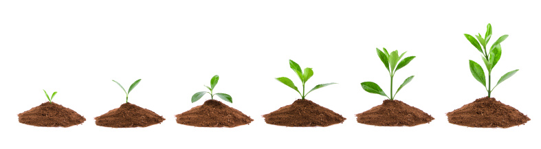 Plant Sequence in dirt isolate on white background