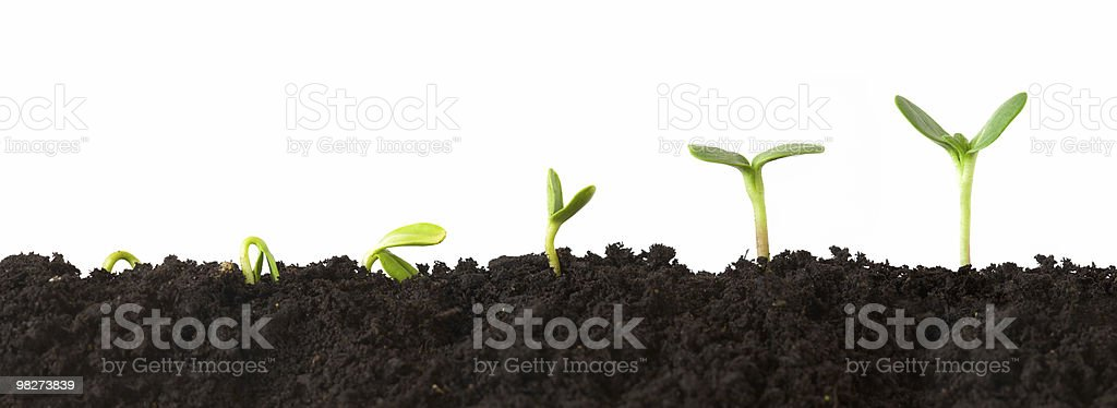 Plant Sequence royalty-free stock photo