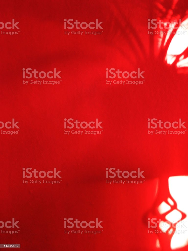 Plant shadow on a red wall stock photo