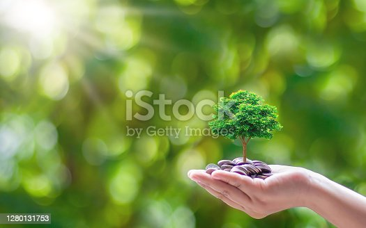 Plant small trees on coins and a natural green background. Money and investment growth ideas.