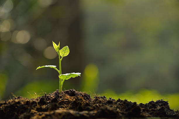 Plant sprouting from the dirt with a blurred background stock photo