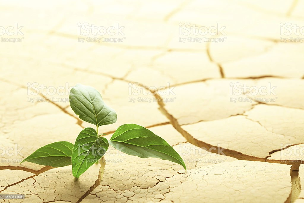 Plant sprouting in the desert stock photo