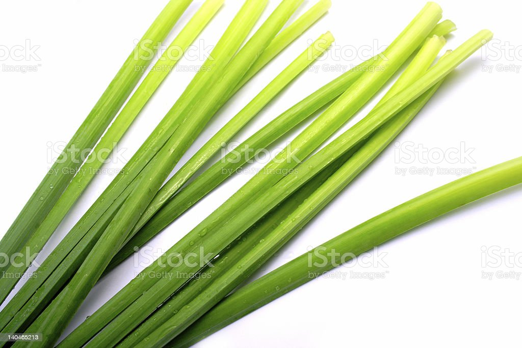 Plant stems on a white background royalty-free stock photo