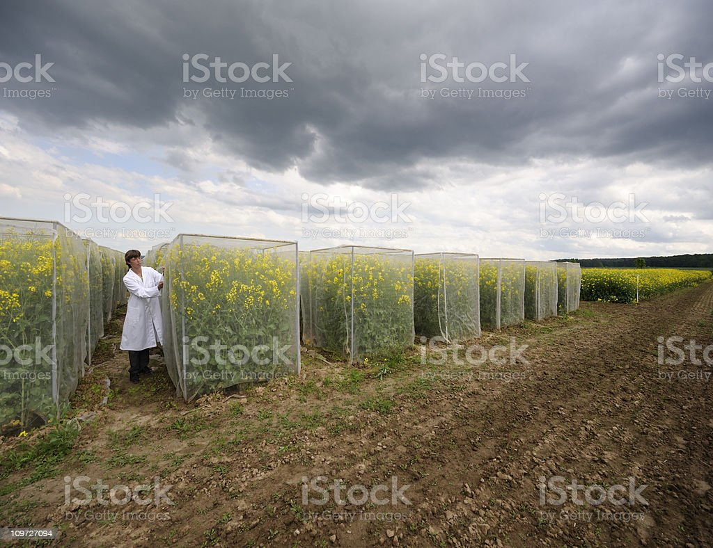 Plant test area royalty-free stock photo