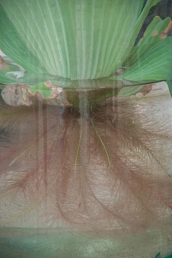 물에서 자라는 식물 0명에 대한 스톡 사진 및 기타 이미지