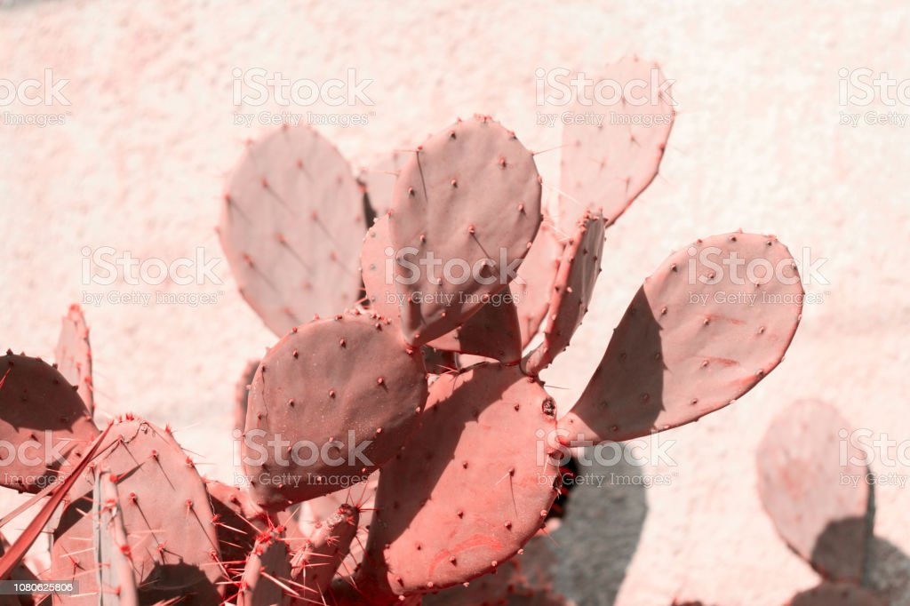 planta de tonos en coral vivo - foto de stock