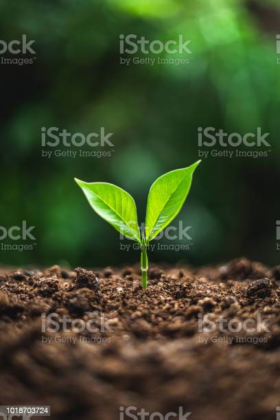 Plant tree in neutral background closeup of fresh green plant picture id1018703724?b=1&k=6&m=1018703724&s=612x612&h=swpz30sstym5fsht9vydl0jk0ne4dpyzm2yfgkpf7ck=