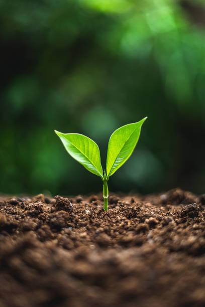plantera träd i neutral bakgrund närbild av färsk grön växt - environment bildbanksfoton och bilder