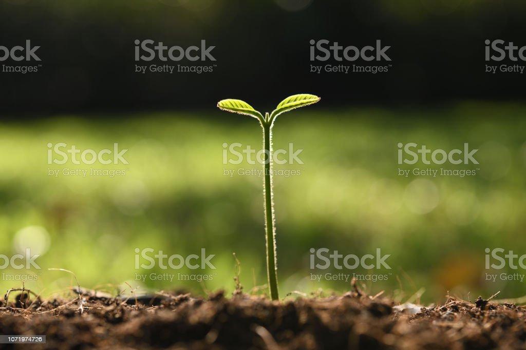 Plant, Tree stock photo