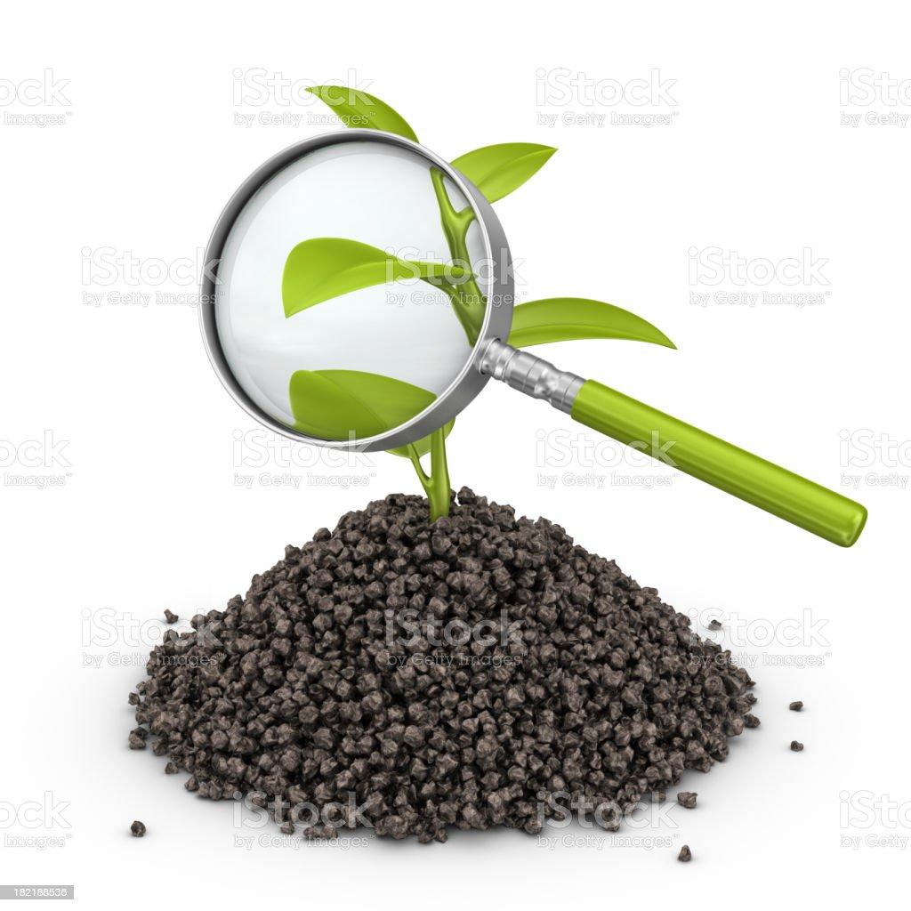 plant under loupe royalty-free stock photo