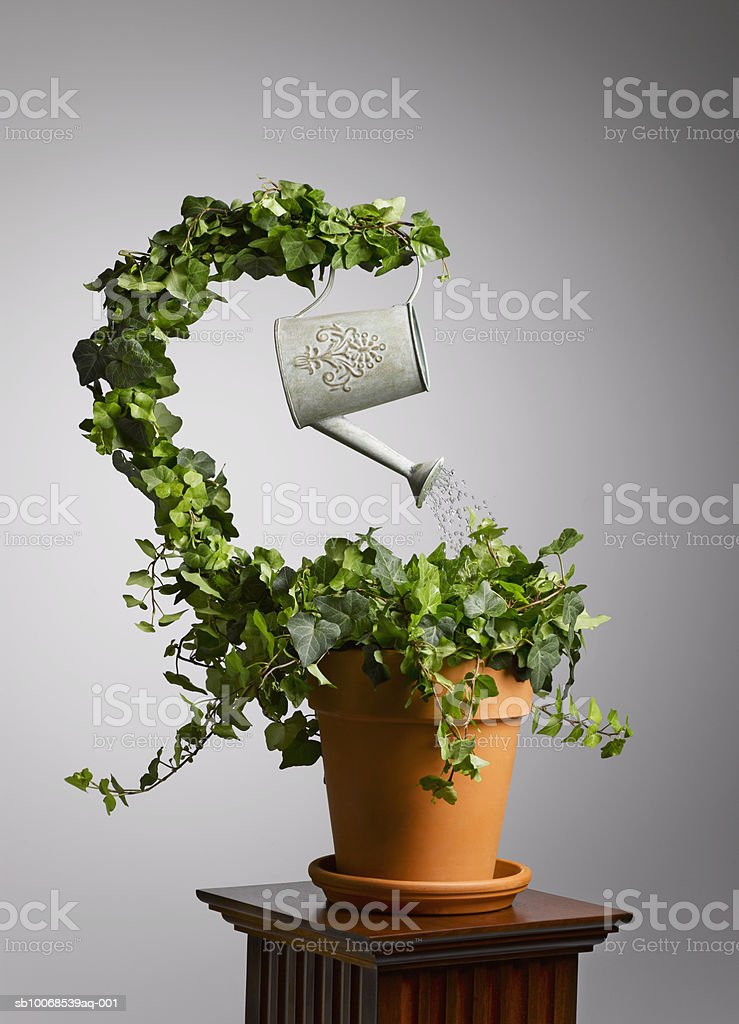 Plant watering itself, close-up royalty free stockfoto