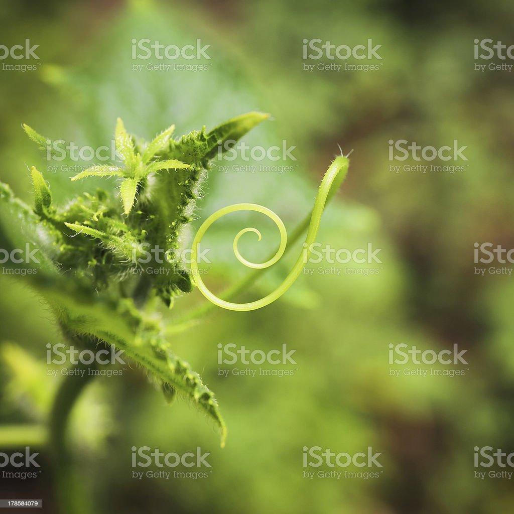 plant whirl closeup stock photo