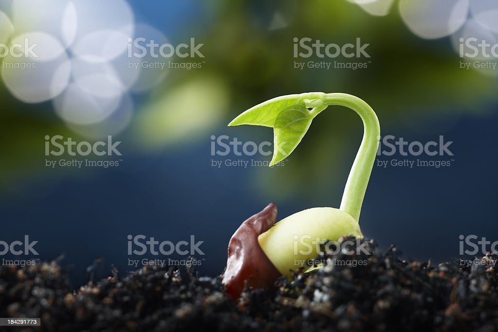 plant with bokeh stock photo