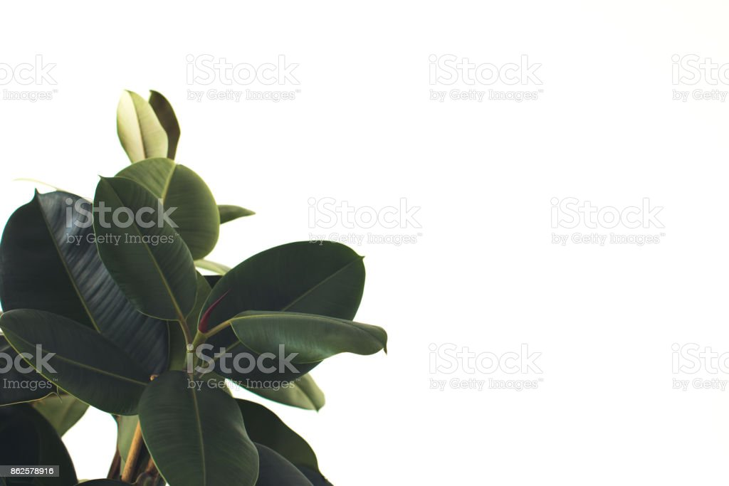 plant with copy space stock photo