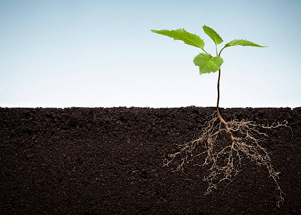 Plant with exposed roots http://www.thomas-vogel.de/istock/is_planetearth.jpg underground stock pictures, royalty-free photos & images