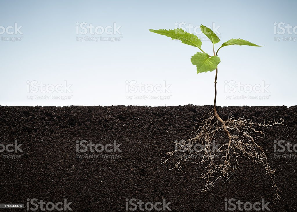 Plant with exposed roots stock photo