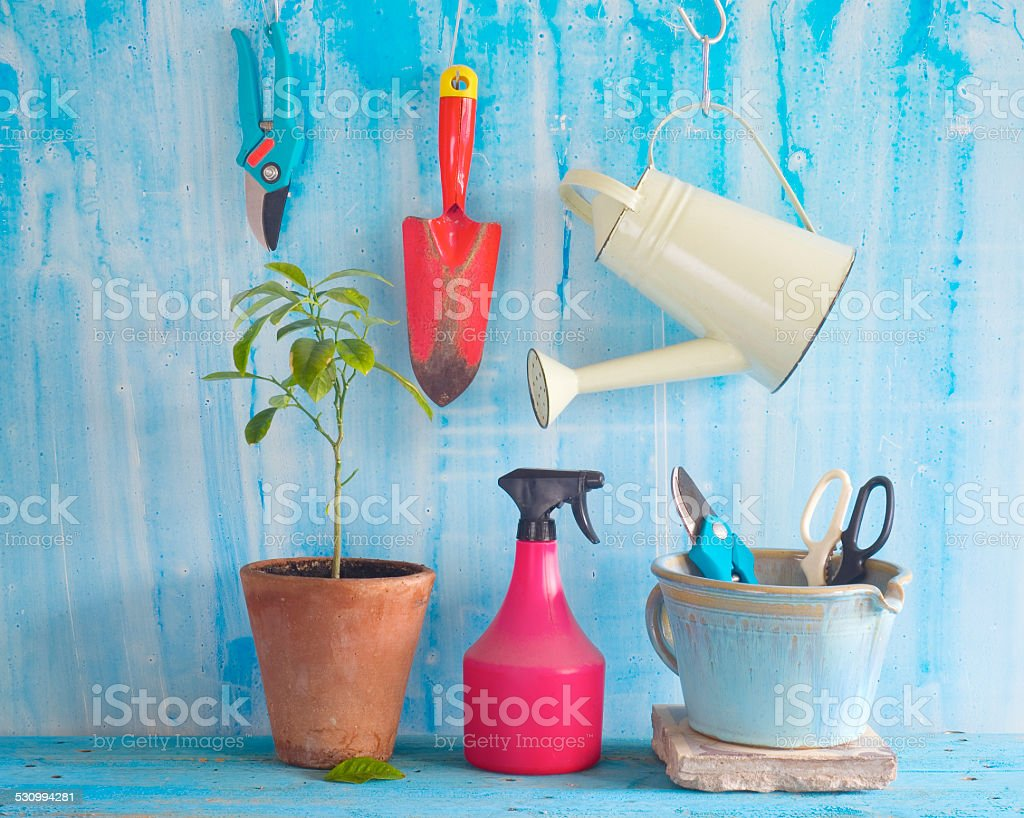 plant with gardening tools stock photo