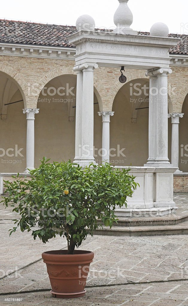 plant with ripe lemon yellow in the middle of cloister royalty-free stock photo
