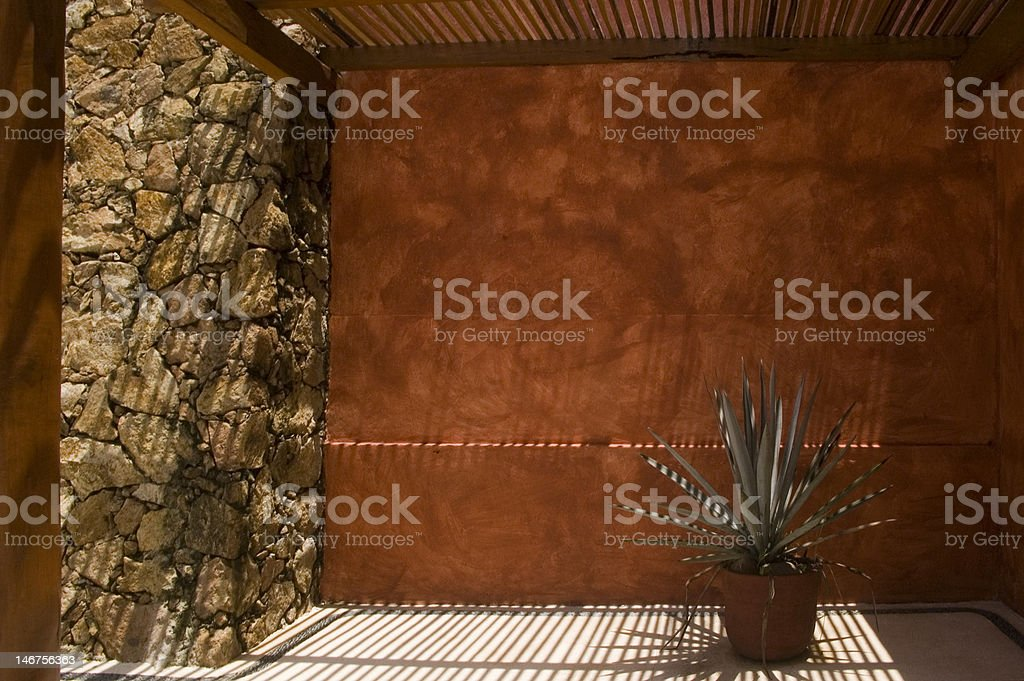 plant with shadows stock photo