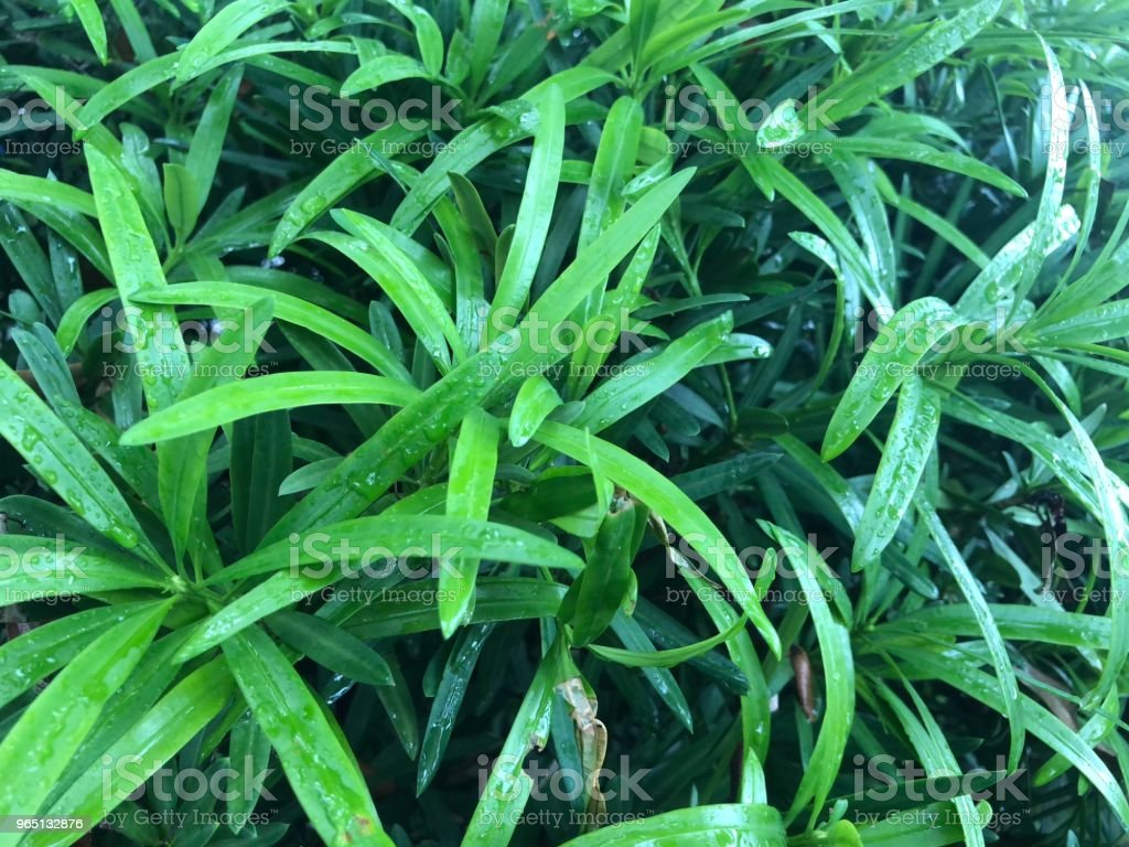 Plant2 royalty-free stock photo