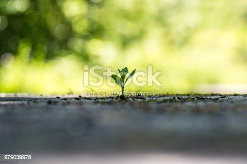 istock Planta nacida en el asfalto 979039978