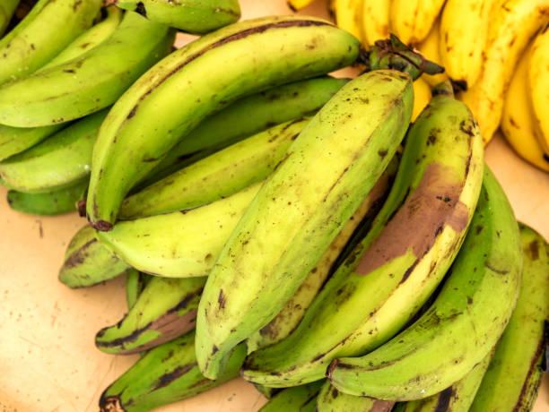 바나나 바나나 나 녹색 바나나입니다. 전통과 인기 있는 간식 그리고 중앙과 북부 남아메리카에 반주. - 플렌틴 바나나 뉴스 사진 이미지