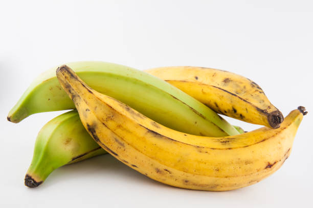 plantain or green banana (musa x paradisiaca) - ripe stock photos and pictures