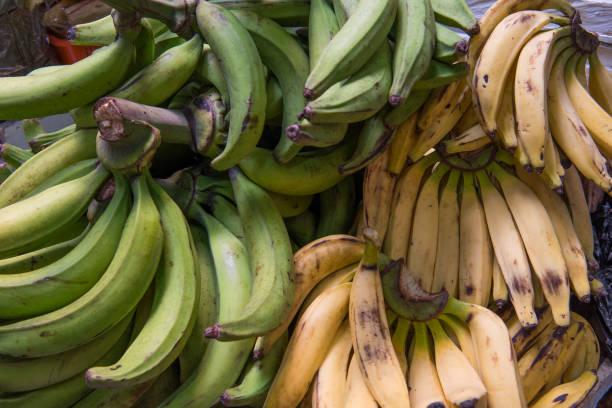plantains, 에콰도르 거리 시장에서 바나나의 유형 - 플렌틴 바나나 뉴스 사진 이미지