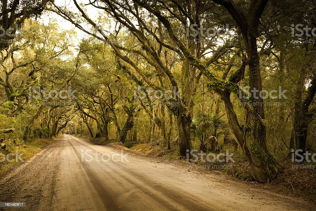 Plantation forest dirt road stock photo